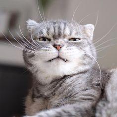 にくたらカワイイ♡ 表情が豊かすぎるニャンコが見せてくれた、変幻自在な変顔10選 | エンタメウィーク