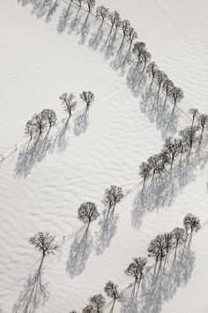 Earth, Snow, Trees