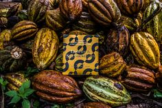 Sweet licorice and piquant Nordic sea buckthorns combined with sophisticated chocolate to create perfect harmony. Organic Chocolate, Raw Chocolate, Vegan Gluten Free, Dairy Free, Cacao Beans, Healthy Treats, Coconut Flakes, Kitchen Accessories, Palm Sugar