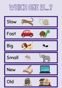 Slow, fast, big, small, new, old worksheet