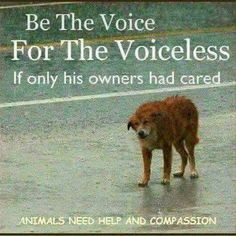 Help the animals