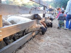 Willowbrook Farm – near gin Gin – Animal feeding Stuff To Do, Things To Do, Farm Stay, Going On Holiday, Outdoor Furniture, Outdoor Decor, Perth, Places To Go, Camping