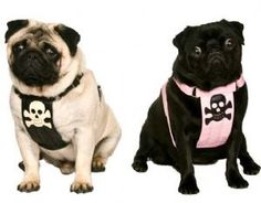 Harnesses looking for a new Home up to £60 off!
