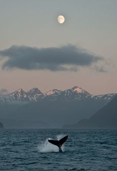 If you're looking for a Whale or Orca gift ideas, look no further. Passport Ocean provides a lot of Whales and Orcas jewelry : Jewelry, Apparel. Animal Photography, Landscape Photography, Nature Photography, Backlight Photography, Photography Composition, Mountain Photography, Photography Aesthetic, Vintage Photography, Photography Ideas