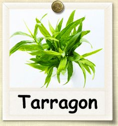 How to Cook With Tarragon. Culinary tarragon, Artemisia dracunculus, is also known as French tarragon to distinguish it from a close relative, Russian tarragon, which is not as flavorful as the true culinary tarragon. Tarragon is generally. Healing Herbs, Medicinal Herbs, Fruit Garden, Edible Garden, Container Vegetables, Veggies, Spice Garden, Wild Edibles, Growing Herbs