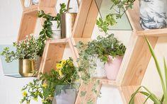 Du liebst Pflanzen und kannst nicht genug davon haben? Mit einem hübschen Pflanzenregal kannst Du Deine vier Wände in eine grüne Oase verwandeln. Wir zeigen Dir zusammen mit Blumen – 1000 gute Gründe, wie Du Regalelemente in angesagter Hexagonform bauen kannst, die unendlich erweiterbar sind.