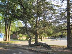 Unique Tree Growth