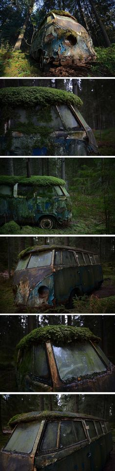 Nature Overcomes a Derelict VW Camper