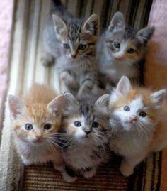 Free cat insurance