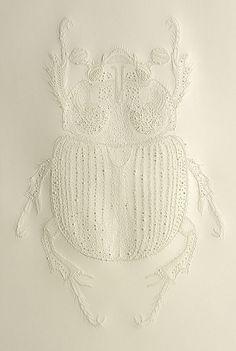 Delicate beetle.