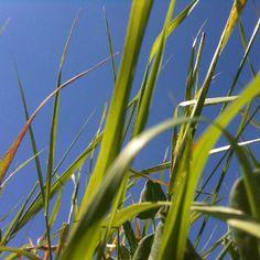 In der Wiese liegen Sommer Sonne leichter Wind