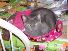 Our cat Gracie in Abigail's lunchbag. :)