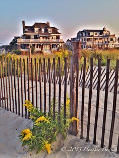 200 Best Quot Painted Ladies Quot Of Cape May Nj Images On