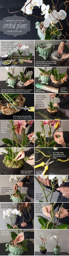 DIY How to Style an Orchid Plant, very helpful since orchids are my favorite flowers