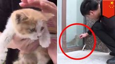 Cat rescue: Kitten trapped behind glass wall for three days, finally get...