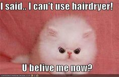 No hair dryers for this kitty.