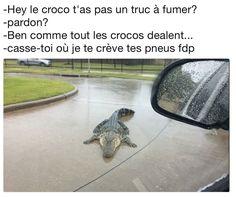 Quand je vois un croco, je l'accoste directe ! https://www.15heures.com/photos/p/47920/