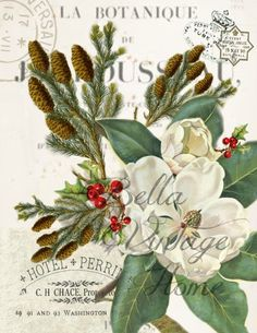 Paper  Christmas Magnolia Print