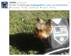 SUPER ‏@buckley264 1h  MY PET 'in' KINGS gear #LAKingsTIX