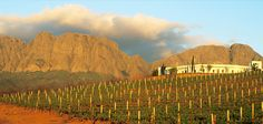 Vergelegen Vineyard in Stellenbosch, South Africa South African Wine, Somerset West, Wine Tourism, Safari Adventure, African Beauty, Cape Town, Places To Go, Coastal, Beautiful Places