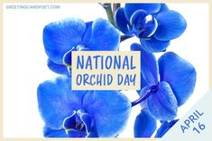 Learn all about orchids for National Orchid Day celebrated on April 16 each year. Check out our orchid quotes, jokes, captions, fun facts, and FAQs. #orchids #gardener #flowers