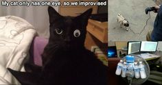 23 People Who Had To Improvise. Funny Cats, Funny Quotes, Lol, Kitty, Memes, Cute, Funny Stuff, People, Internet