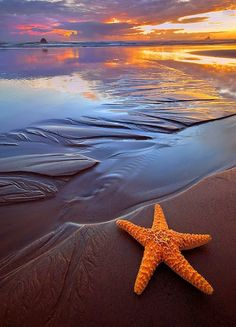 "I want to be this starfish! ""starfish and sunset"" by rick lundh - cannon beach, oregon"