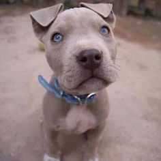 His blue eyes are so perfect. I love this dog!