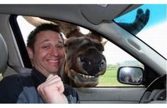 30 Hilarious Animal Photobombs