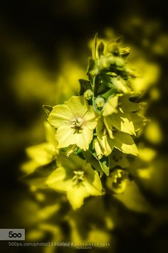 the yellow by JrgWolfshfer. Please Like http://fb.me/go4photos and Follow @go4fotos Thank You. :-)
