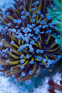 20130712 Reef Tank Coral Photos   Flickr - Photo Sharing!