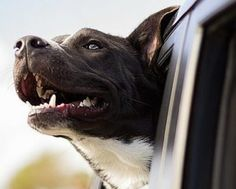 While there's no question us proud dog moms LOVE our fur babies, how much do we really know about them? Check out these 15 surprising facts about dogs!