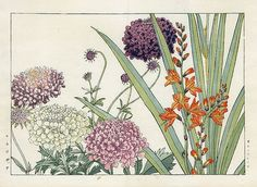 Tanigami Konan Flower Woodblock Print 1917--Love this print!  want it for the bedroom.
