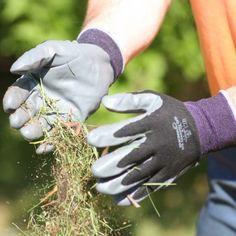 Showa Floreo 370 Garden gloves in action - Harrod Horticultural garden accessories http://www.harrodhorticultural.com/garden-accessories-tcid139.html