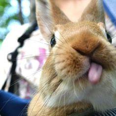 Bunny tongue.