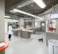 zona trabajo clinica veterianria