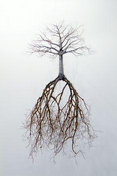 ~Jorge Mayet tarafından ağaç heykeller. http://www.mozzarte.com/tasarim/jorge-mayet-tarafindan-agac-heykeller/