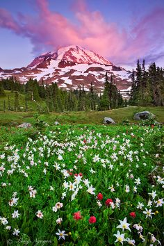 Wildflowers, Mount Rainier, Washington  photo via katie