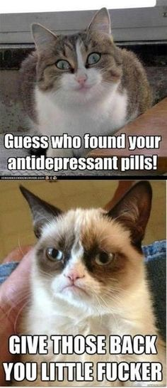 Guess who found your antidepressant pills!.....