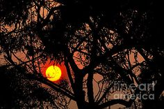 #BUSHFIRE #SUNSET #Glow #Photography Quality Prints and Cards at: http://kaye-menner.artistwebsites.com/featured/bushfire-sunset-kaye-menner.html  -