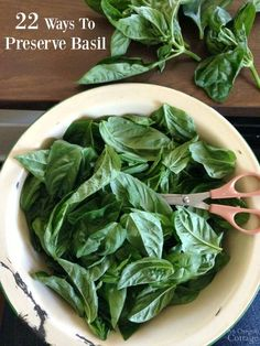 22 Ways to Preserve Basil- and Pesto Isn't One of Them! Find ideas for using your basil in jams to can, vinaigrettes & oils to refrigerate, soups, bread & sauces to freeze, and salts to keep - there's something for everyone!