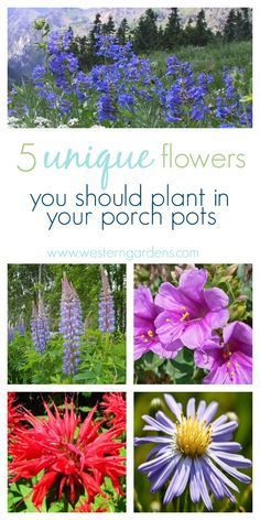 5 Plants for Utah Porch Pots - Western Garden Centers - 5 Plants for Utah Porch Pots – Western Garden Centers Need some beautiful, new plants for your porch pots? Try these 5 native Utah plants to freshen up your outdoor decor! Hydrangea Landscaping, Hanging Plants, Xeriscape, Garden Front Of House, Plants, Porch Plants, Outdoor Plants, Garden Center, Landscaping Plants