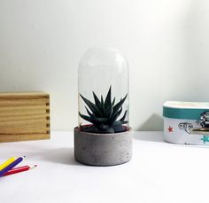 Concrete Terrarium Planter with bright colored 3D printed lining. Would look great in any interiors style. Add modern simplicity to your house or office with this handmade terrarium. Great for plants and compositions. Each concrete terrarium is handmade and will look completely unique. Base inside is lined with 3D printed insert with gaps to allow air circulation. Dome is made of glass. Available with Red, Blue, Green, Yellow, Black, White inserts. Other colours available on request…