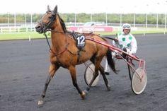 meilleures cotes pour le quinté du prix de belgique ce dimanche 17 janvier 2016 au départ 16 chevaux