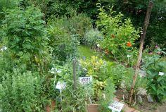 http://zahradkaruvrok.cz/2015/08/jak-nam-na-zahrade-pomahaji-bylinky/