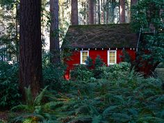 a little red cottage in the forest?