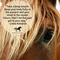"""Take a deep breath. Keep your body fully in the present and your mind in the recent future. Don't let the past get in your way."" - Linda Kohanov  ~Wind Horse Sanctuary offers the opportunity to connect your mind, body and spirit with the experience of Equine Facilitated Learning (EFL). Learn more at our website: www.windhorsesanctuary.com"
