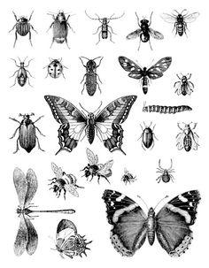 Artemio Clear Stamp Bugs (10001242) - @Irishteddy's