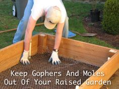 Related Posts:3 Ways To Protect Root Crops From Gophers And MolesHow To Get Rid Of Moles With Juicy Fruit GumHow To Get Rid Of Moles And VolesHow To Make Raised Garden With Food Grade BarrelsDIY Raised Garden Bed Irrigation For $10012 Raised Garden Bed Tutorials