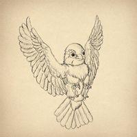 How to Draw Animals: Birds, Their Anatomy and How to Draw Them (via vector.tutsplus.com)